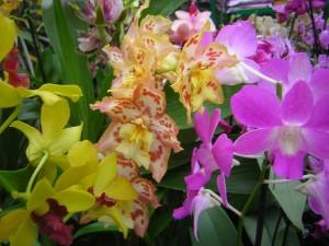 orchidea kép
