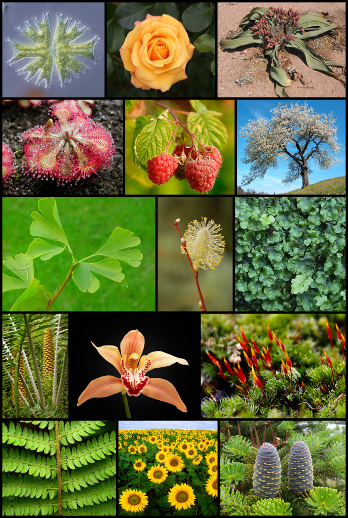 Diversity_of_plants_image_version_5